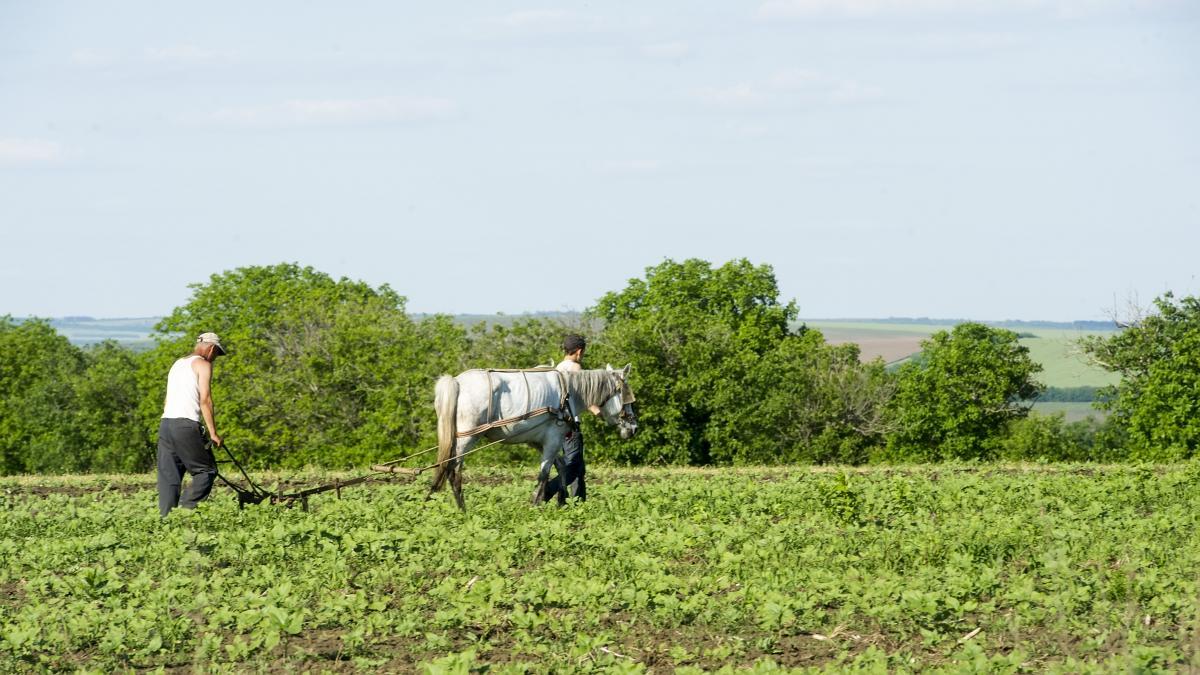 Молдова полностью аграрная страна / Фото EU