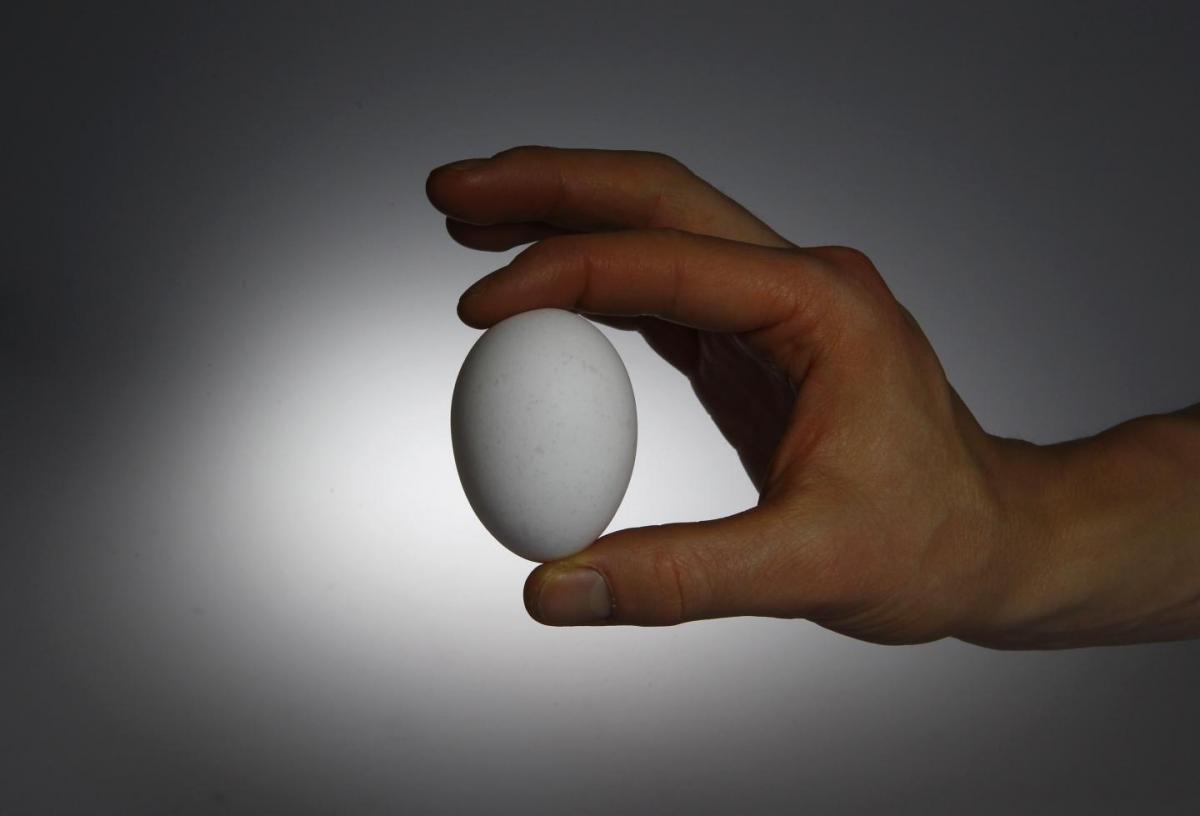В 1956 году в США курица снесла самое большое в мире яйцо - 454 грамм / иллюстрация REUTERS