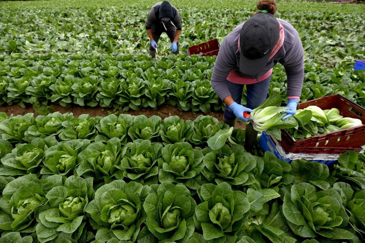 Найбільший попит на сезонних робочих є на фермерських господарствах \ фото REUTERS