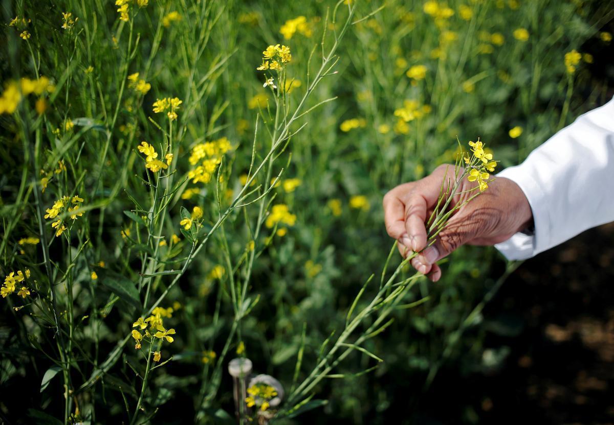В Украине рынок биотоплива находится в стадии становления и развития / REUTERS