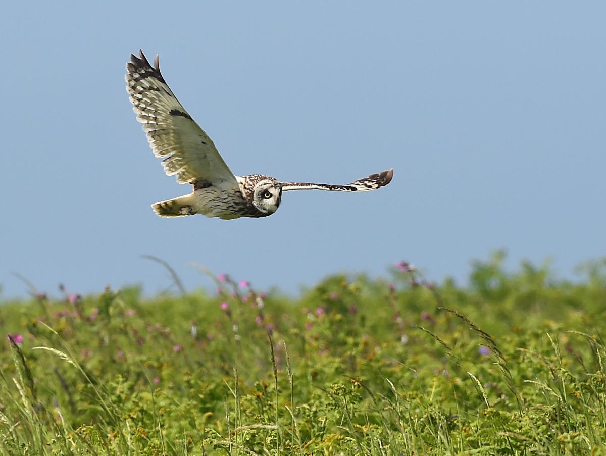 Деньги направят Всемирному фонду дикой природы \ фото REUTERS