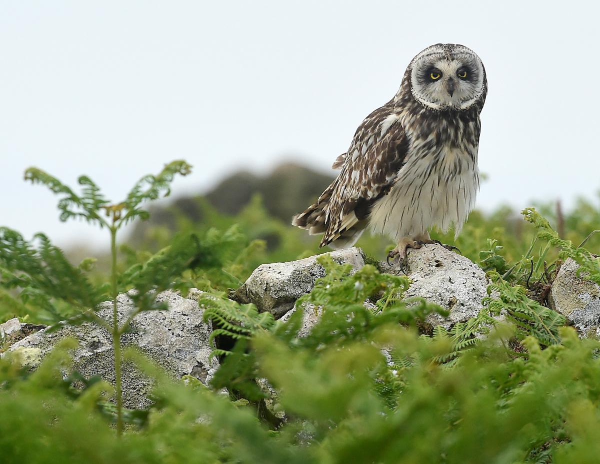 3 марта - Всемирный день дикой природы / фото REUTERS