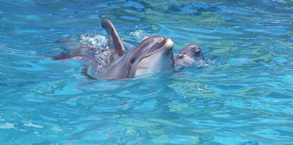 В одесском дельфинарии родился дельфин \ 048.ua