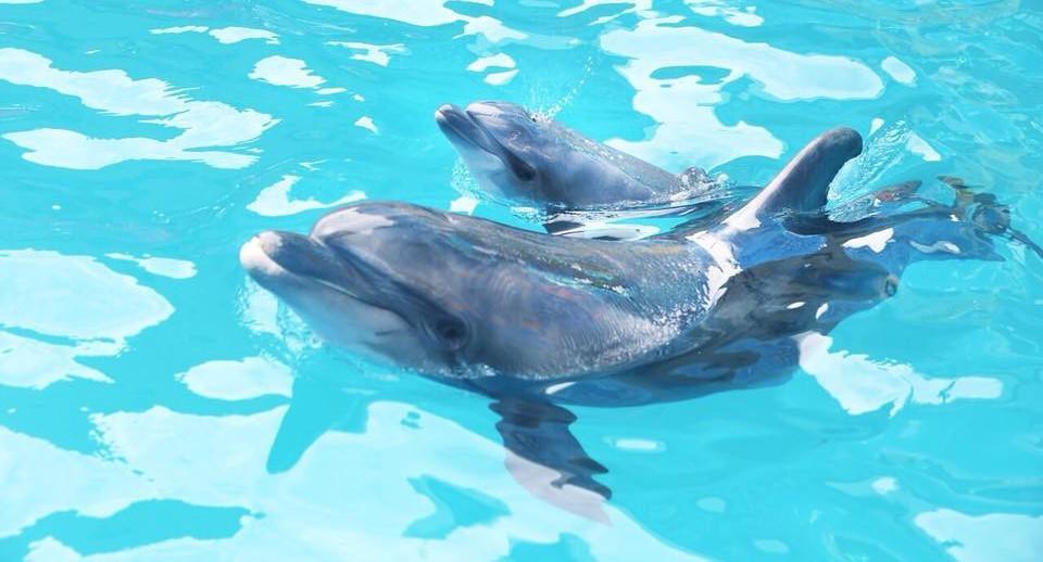 У дельфинов тоже есть свой праздник / фото 048.ua