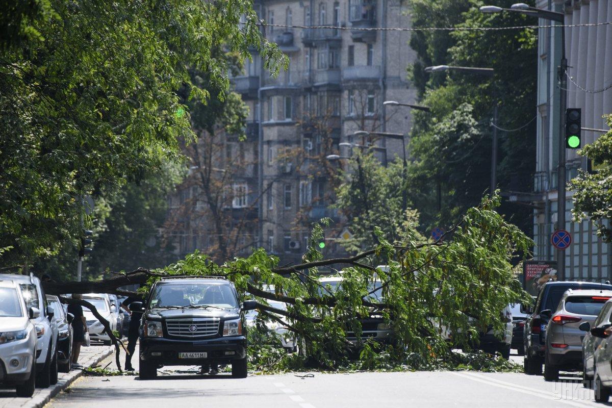 У Києві чоловік ледве встиг ухилитися від падаючого дерева / фото УНІАН