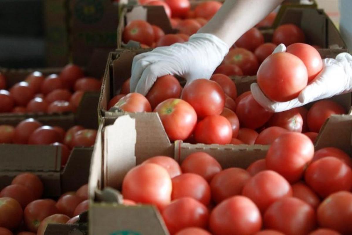 В Японии впервые одобрили продажу генномодифицированных овощей / REUTERS
