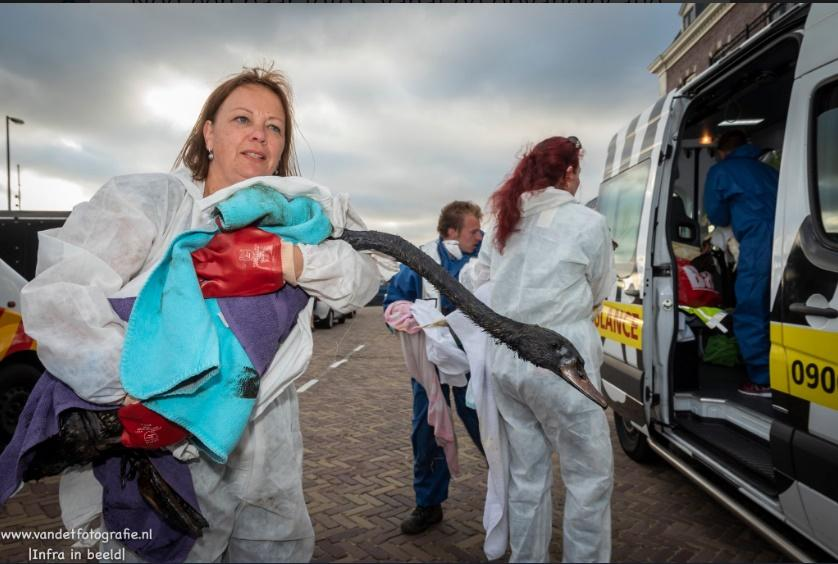 У Нідерландах стався масштабний витік нафти, що уразив сотні птахів / фото twitter.com/OliviervanDet