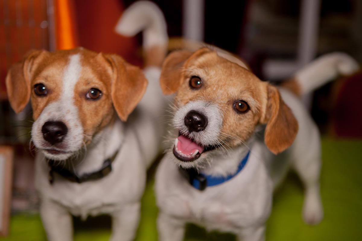 В Днепре прошел фестиваль домашних животных / фото Информатор