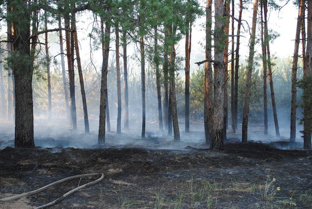 На Харьковщине спасатели с помощью авиации локализовали лесной пожар / фото ГСЧС