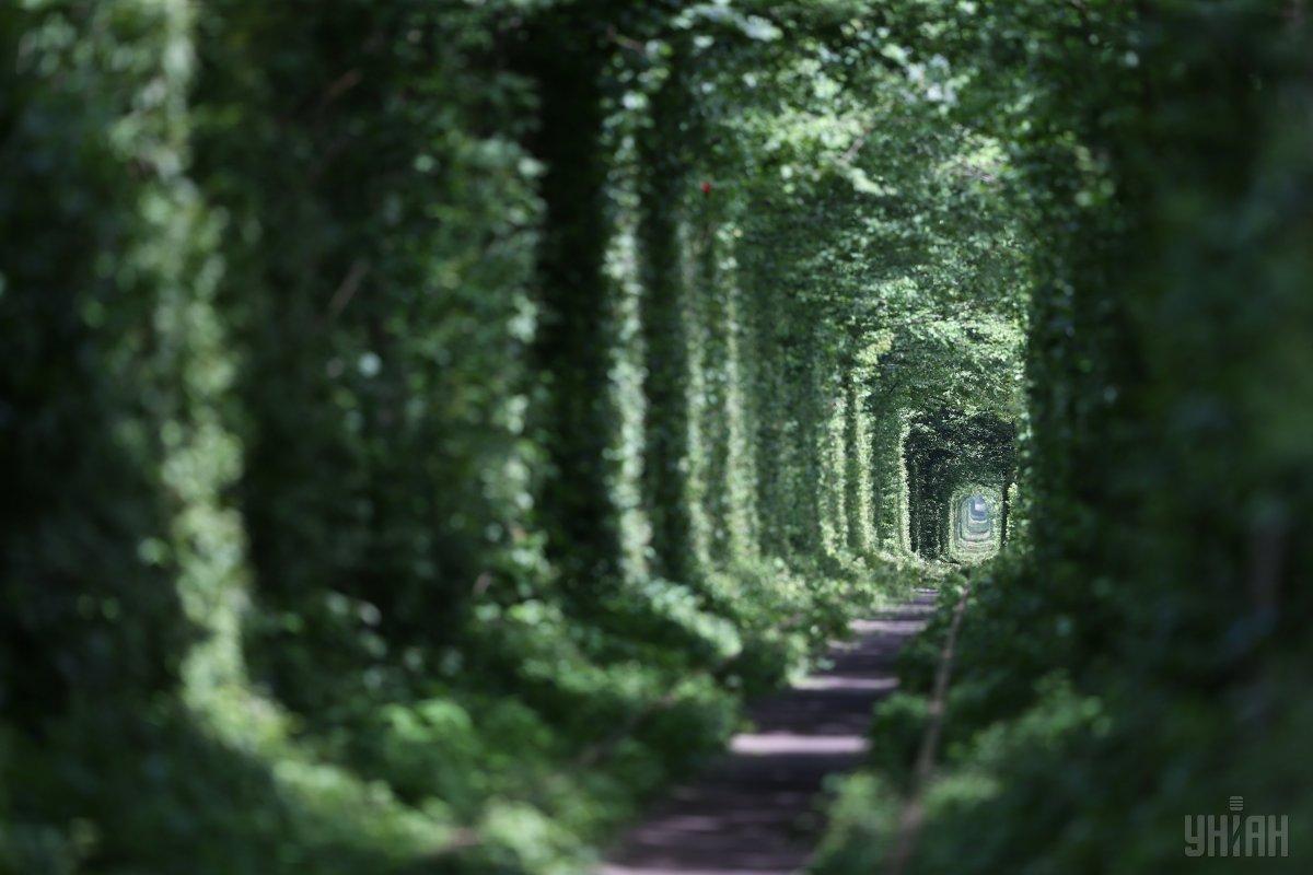 Въезд в «Тоннеля любви» на Ривненщенедля туристов сделали платным / фото УНИАН