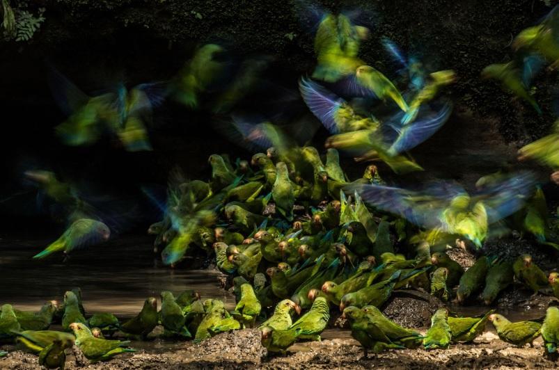 Фото www.audubon.org