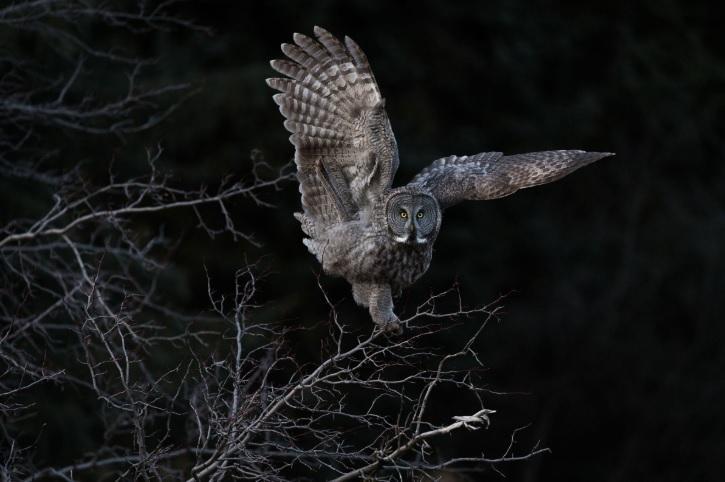 Этот снимок совы получил Гран При конкурса Audubon Photography Awards 2018 / Фото www.audubon.org