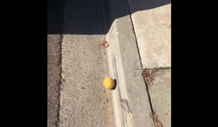 В сети набирает популярность видео, скатывающегося с горки лимона / Twitter @sakeriver