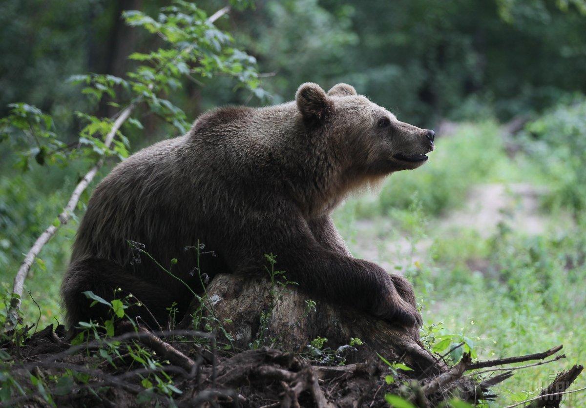 На Камчатке туристический маршрут закрыли из-за медведей / УНИАН