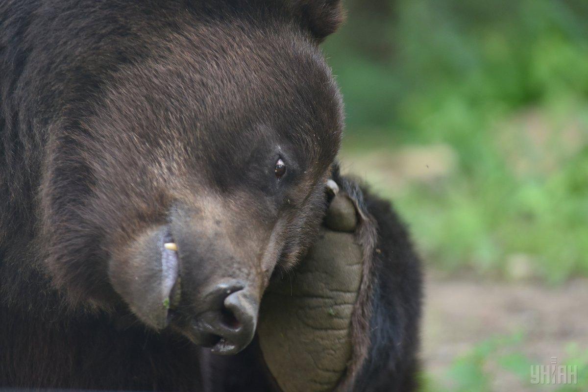 Животное застрелили / фото УНИАН
