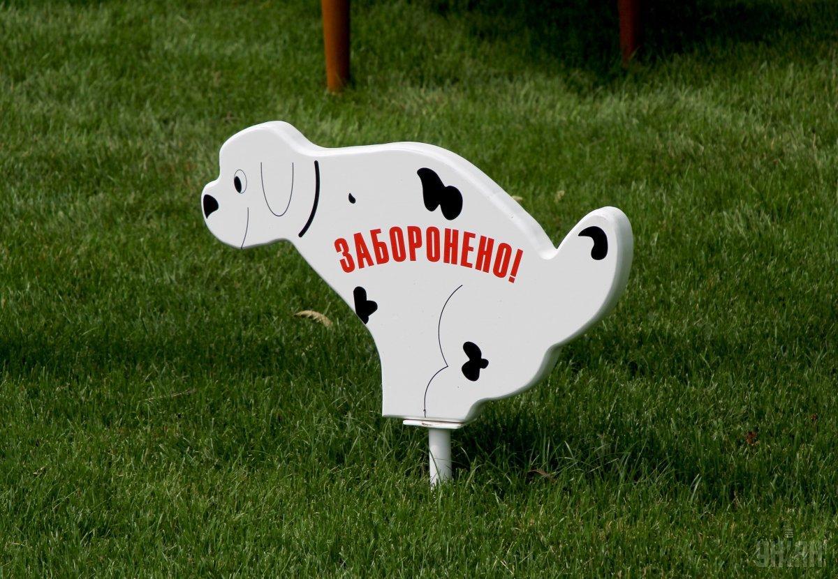 Во Львове владельцев собак обязали убирать за своими питомцами / фото УНИАН