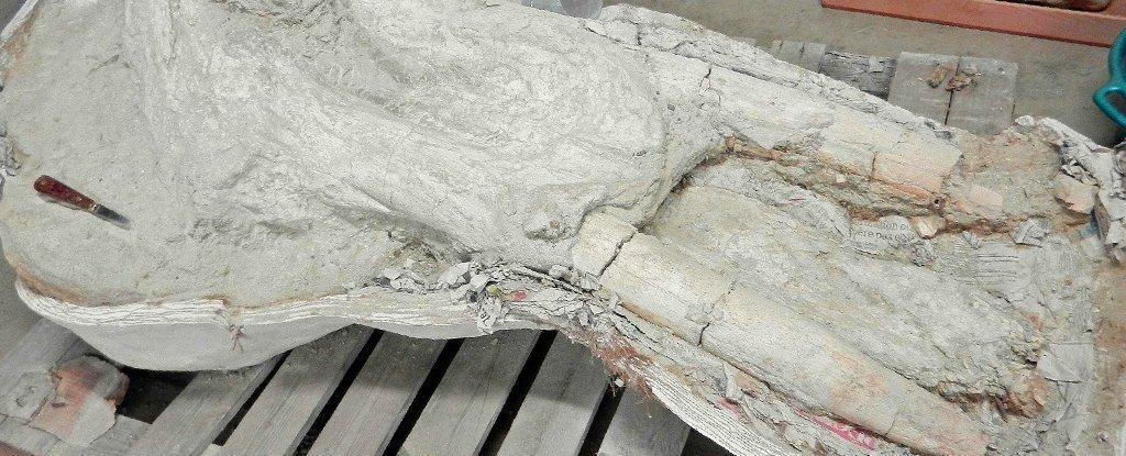 Французкий фермер несколько лет скрывал от ученых череп древнего животного, найденный на своей территории / фото Музей естественной истории Тулузы