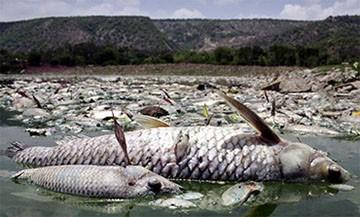 У водоймах масово дохне риба / фото Асоціаціярибалок України
