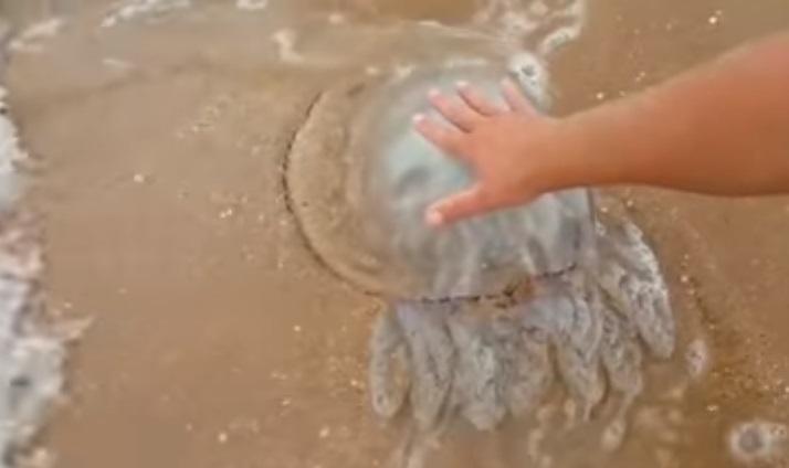 Оккупированный Крым страдает от нашествия медуз / Скриншот
