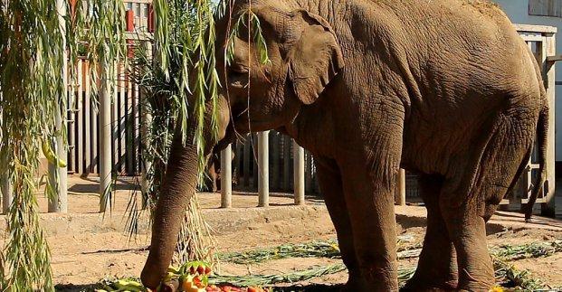 Харьковским зоологам ее передали 7 октября 2000 года \ city.kharkov.ua