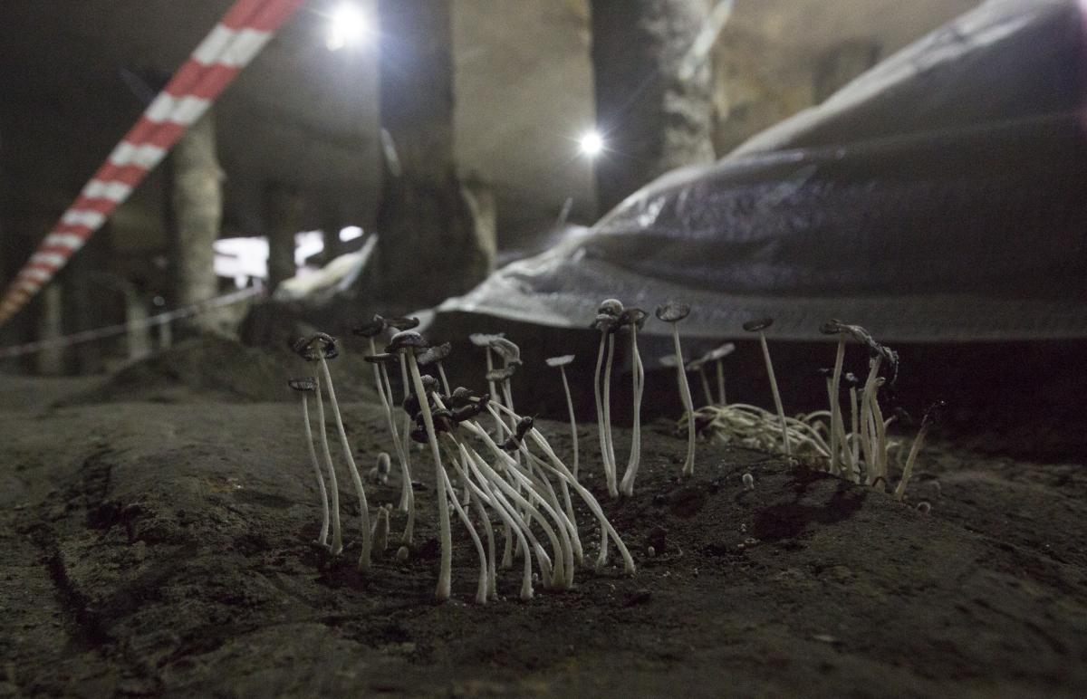Остается четыре-шесть метров культурного слоя, который потихоньку разрушается / Фото УНИАН