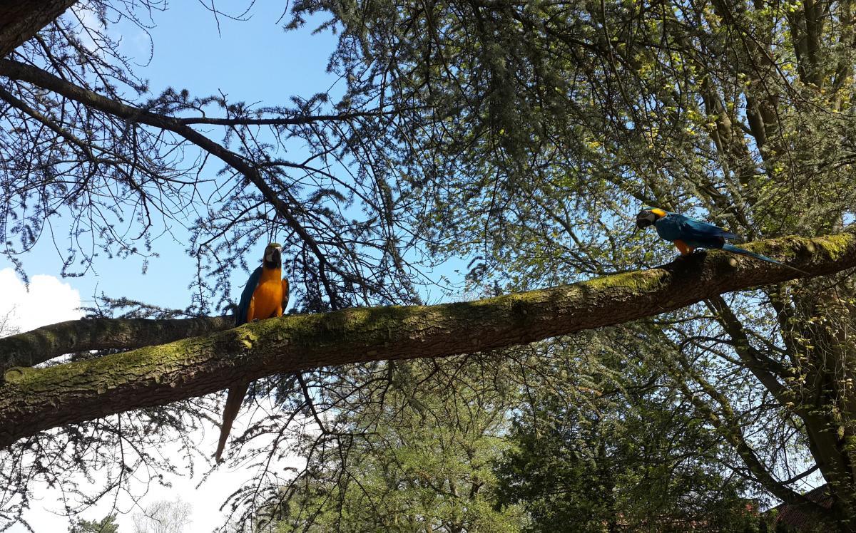 После шоу попугаев еще полчаса собирают по всему парку / Фото Марина Григоренко