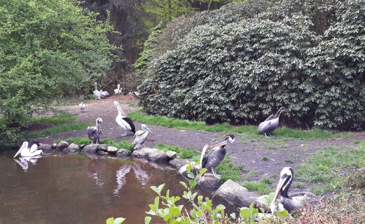 Местные пеликаны / Фото Марина Григоренко