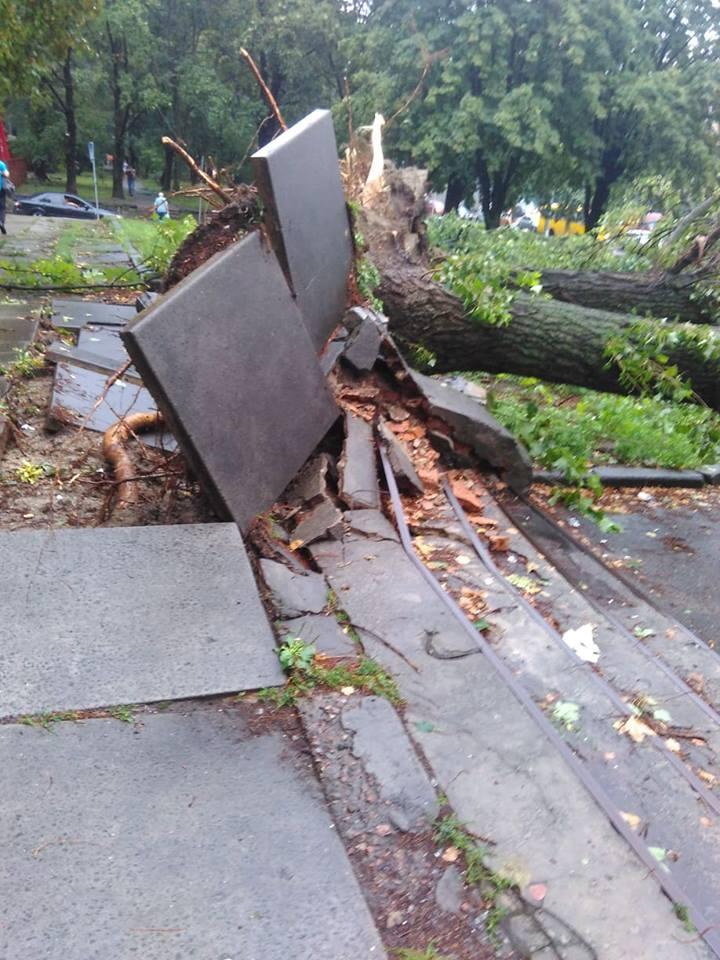 На Шулявці завалило дерева / Фото УНІАН