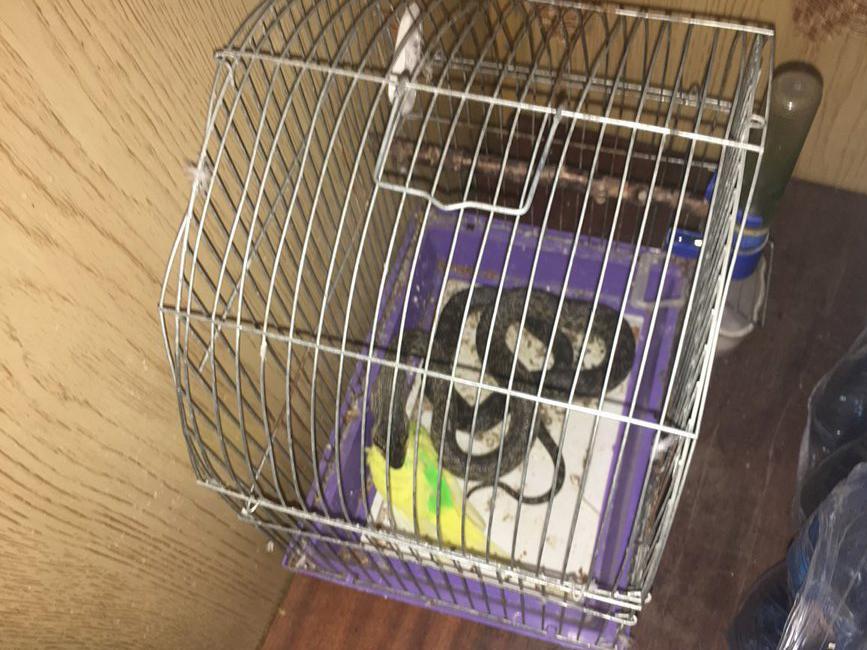 В Николаеве женщина обнаружила в клетке с попугаем змею / фото ГСЧС