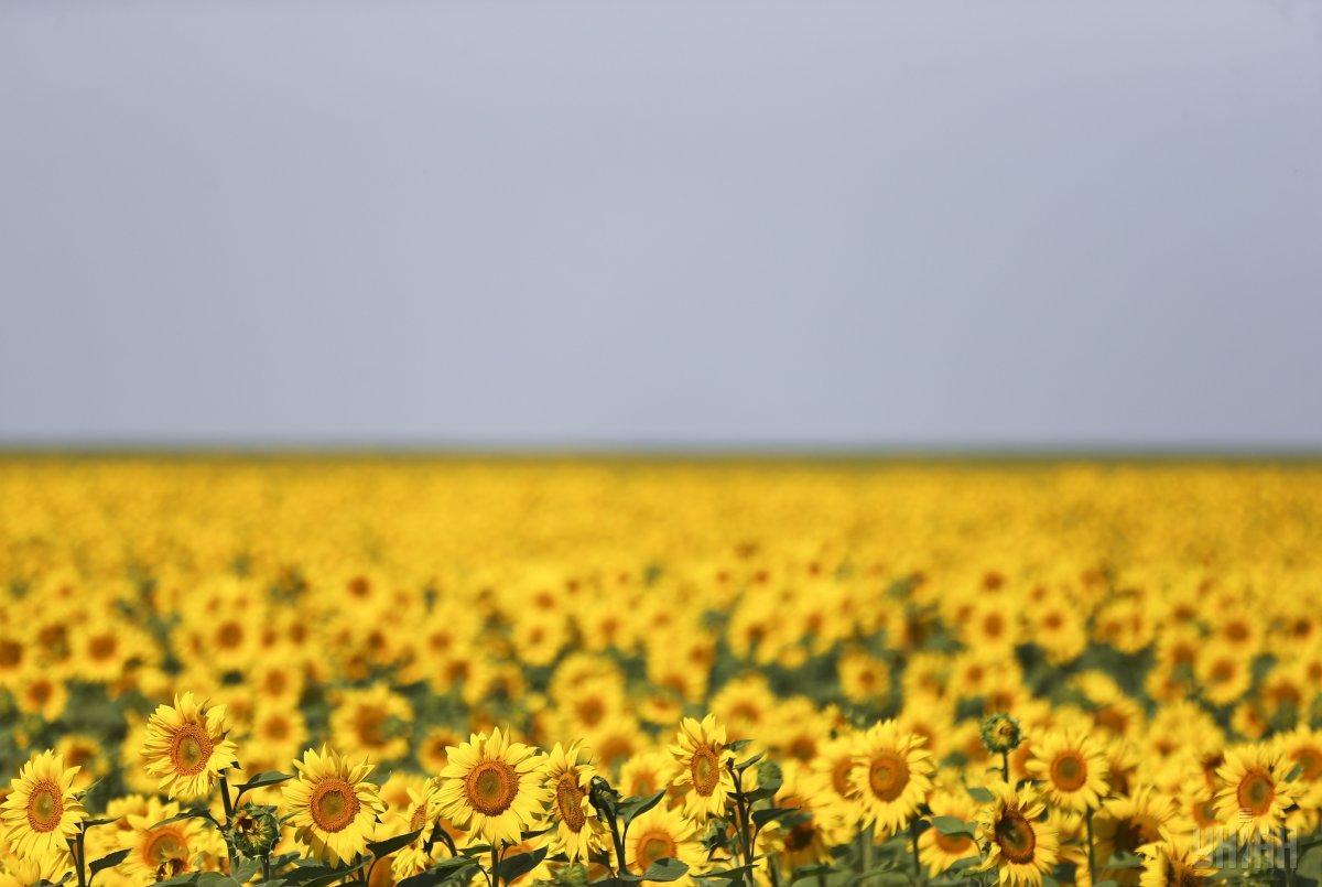 Завтра обіцяють спекотну погоду / фото УНІАН