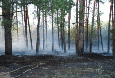 В Украине сохраняется чрезвычайный уровень пожарной опасности