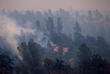 Кількість загиблих через лісові пожежі у Каліфорнії зросла до 76 (відео)