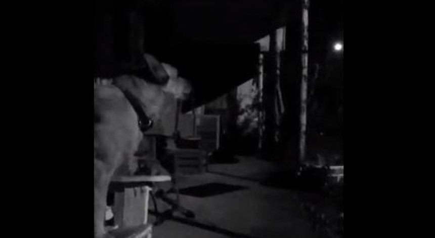 Собака випадково наспівав пісню Брітні Спірс й став зіркою мережі (відео)
