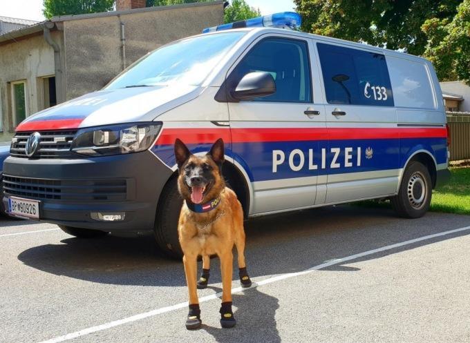 Владельцам обычных собак тоже советуют защищать лапы своих питомцев / Фото Keystone