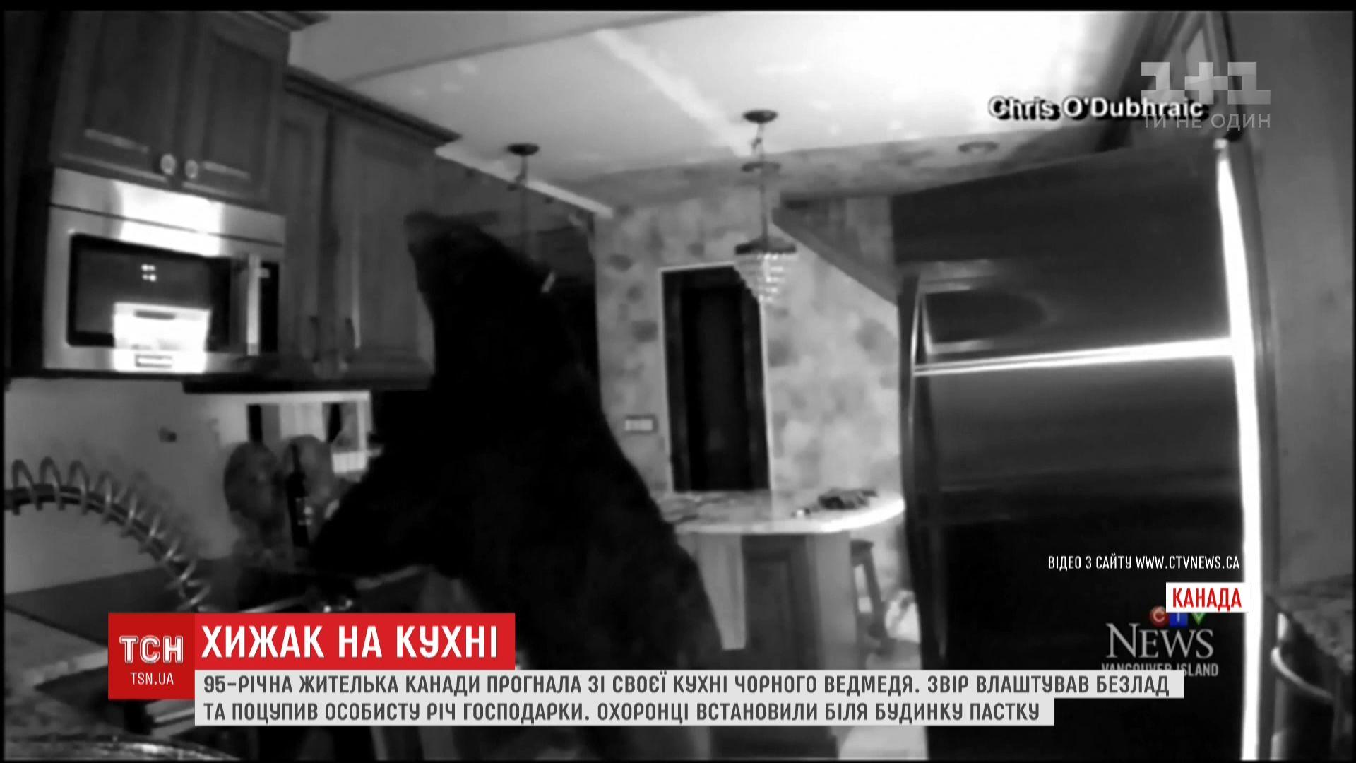 Ведмідь не знає, що повертатися - погана прикмета / Кадр з відео ТСН