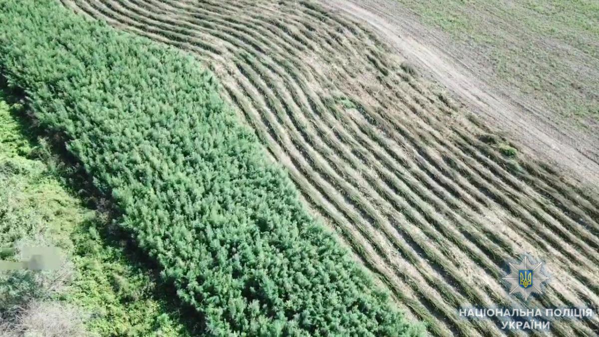 Незаконний врожай виявили між населеними пунктами Кислиця і Богате / фото npu.gov.ua