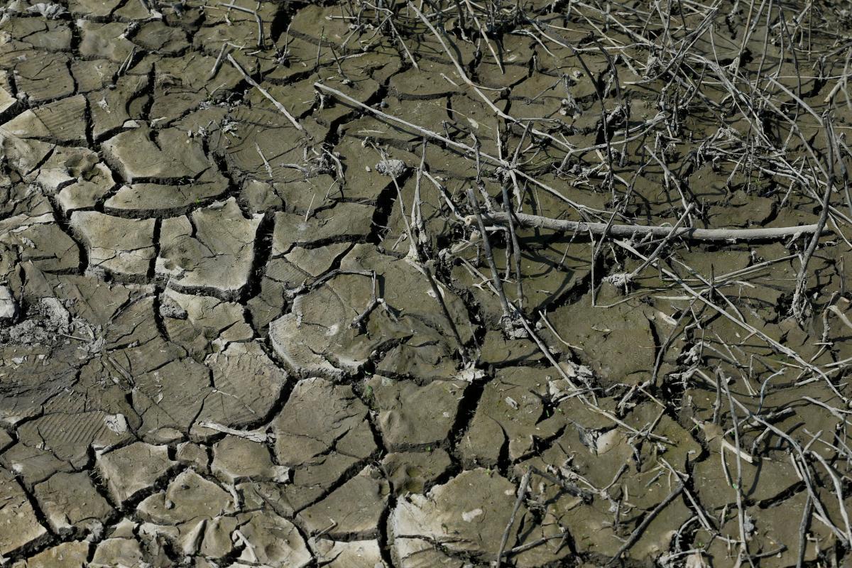 Из-за безводного лета урожай зерновых в Украине снизится минимум на 5 миллионов тонн / REUTERS