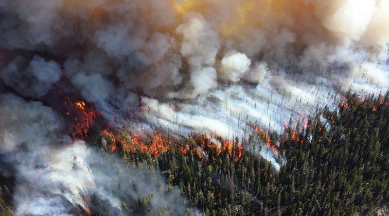 Лесной пожар в Калифорнии / inVictory