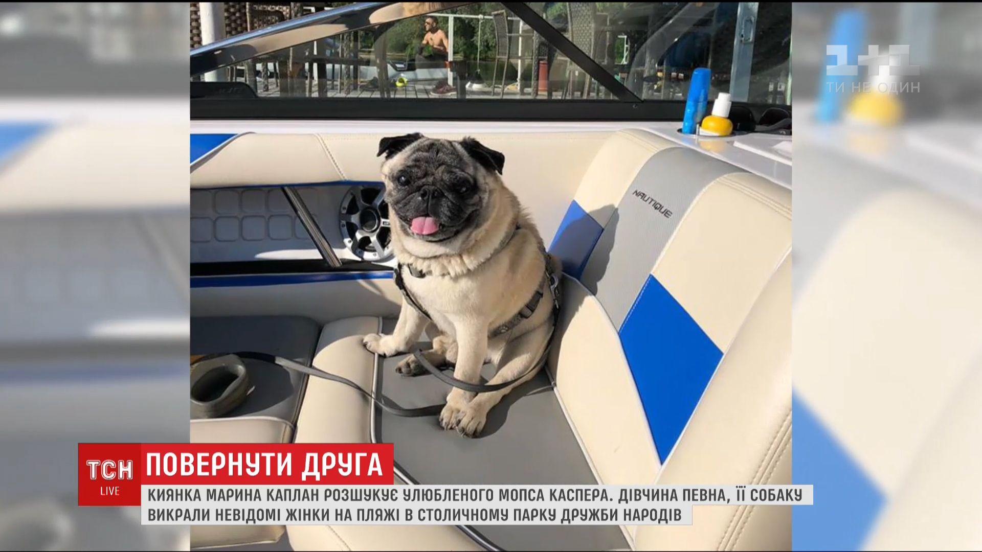 Киевлянка ждет возвращения любимца / Кадр из видео ТСН