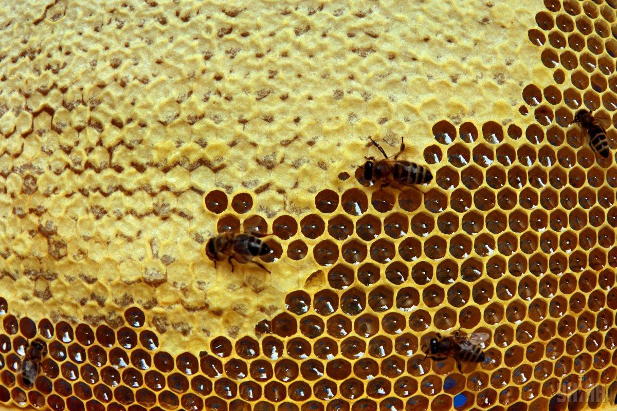 Україна повністю використовувала квоти на експорт меду / фото УНІАН