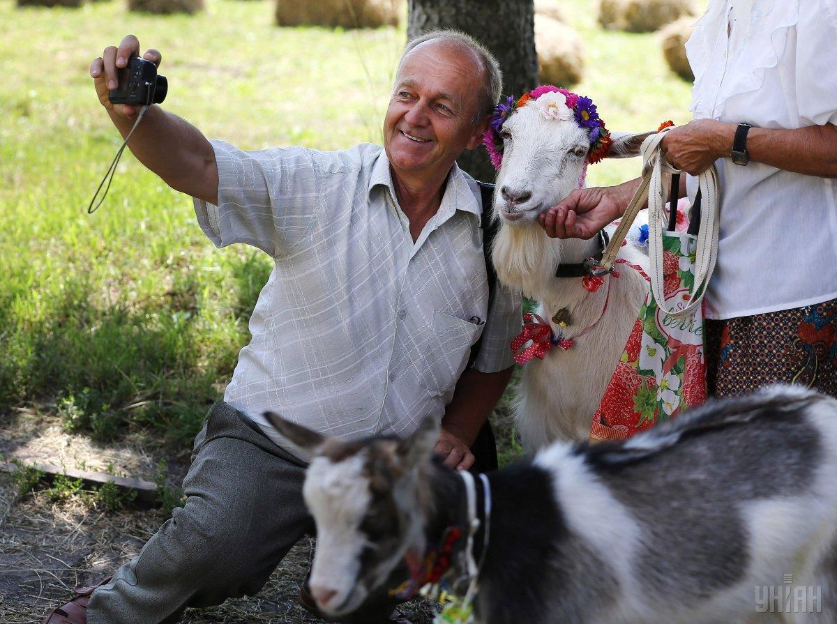 Кози показали себе у всій красі / Фото УНІАН