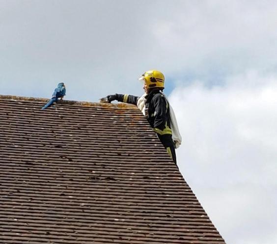 У Лондоні папуга-поліглот обматюкав пожежників, які приїхали його рятувати