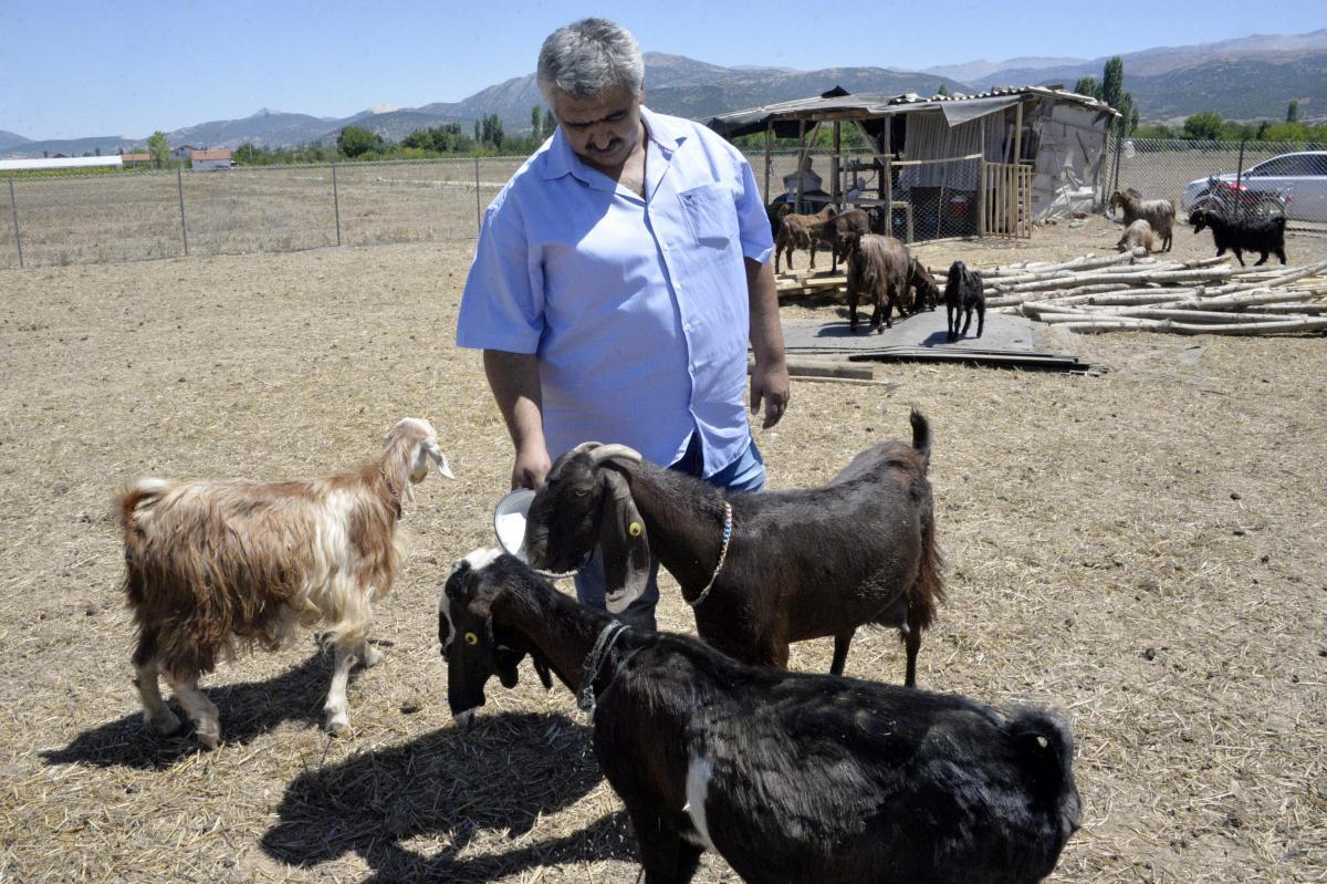 Кози розуміють вирази обличь людей/ cnnturk.com