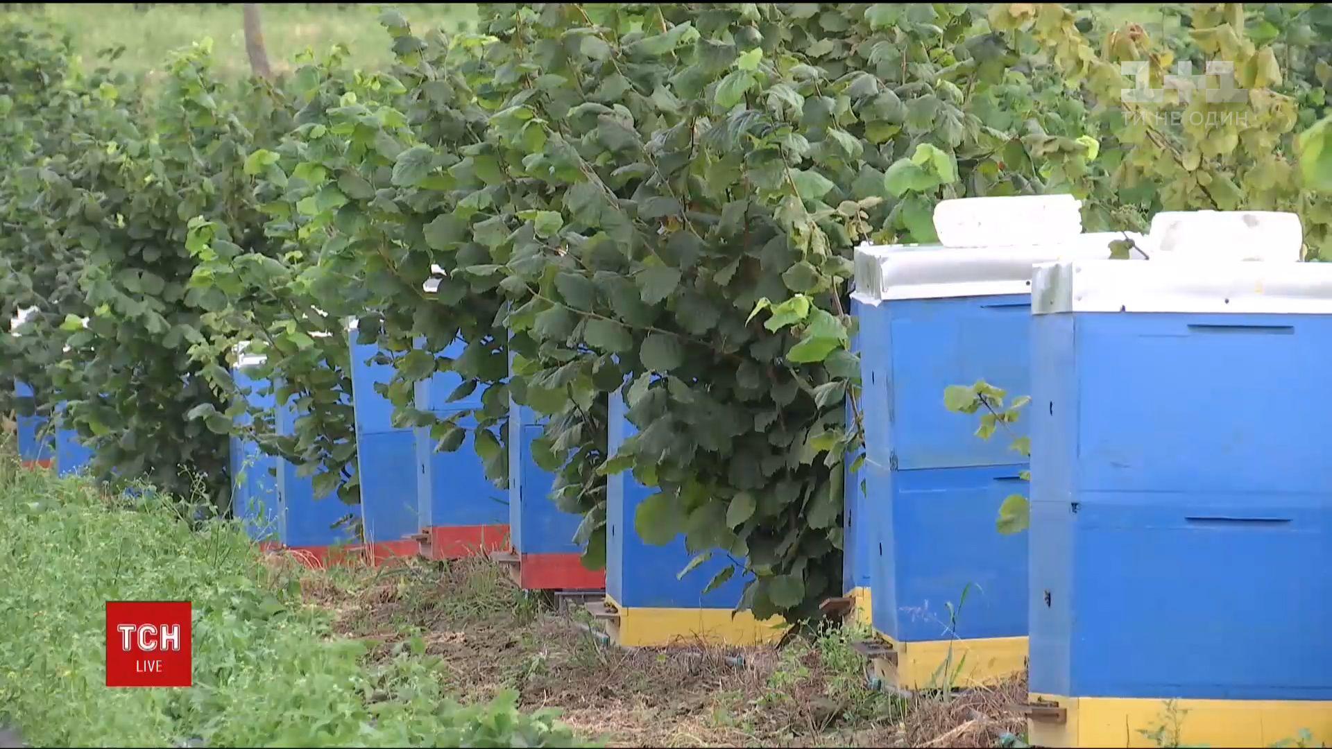 Цього року загинуло близько 45 тисяч бджолиних родин / Кадр з відео ТСН