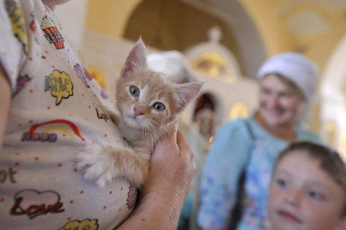 Фото Александра Авилова/Агентство «Москва»