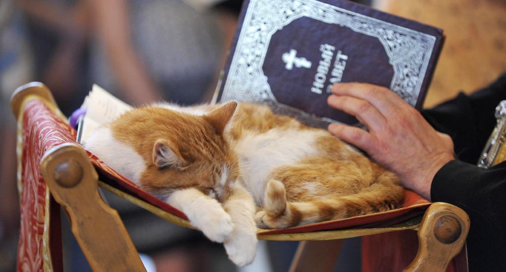 Верующие приехали на богослужение вместе со своими котами / Фото Константина Гудкова / foma.ru