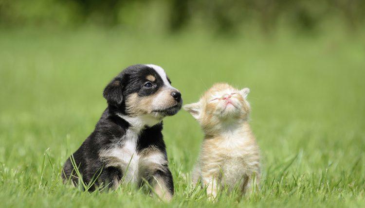 Британское правительство позаботилось о щенках и котятах / Фото animals.mom.me