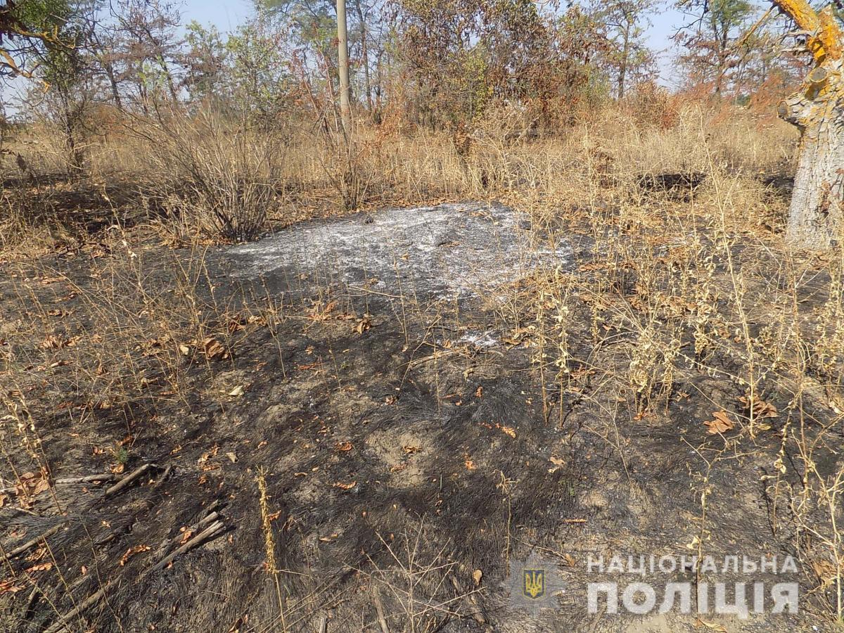 """Также правоохранители отметили, что кусты винограда """"не повреждены"""" / фото НПУ"""