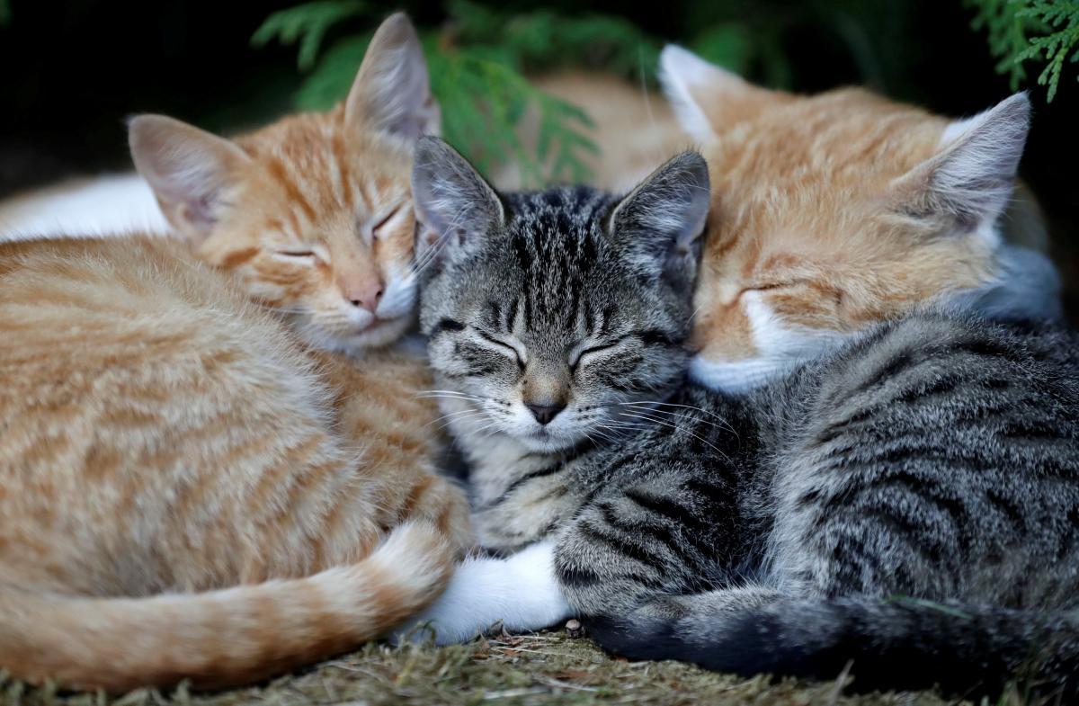 Коты / REUTERS