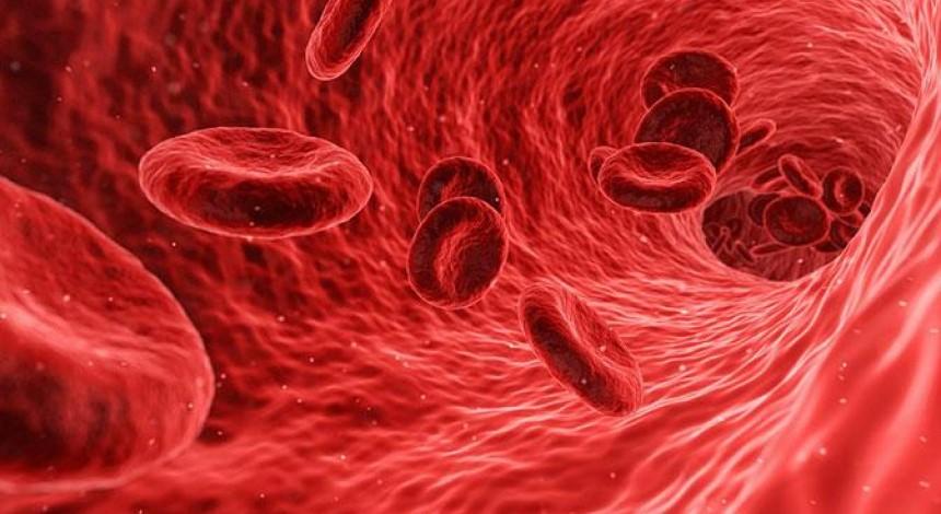 Сигнал смерти: ученые впервые узнали скорость гибели клеток